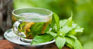 چای سبز و رازهای چربی سوزی آن